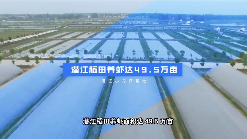 [荆楚好标准]标准引领潜江小龙虾迈向千亿产业