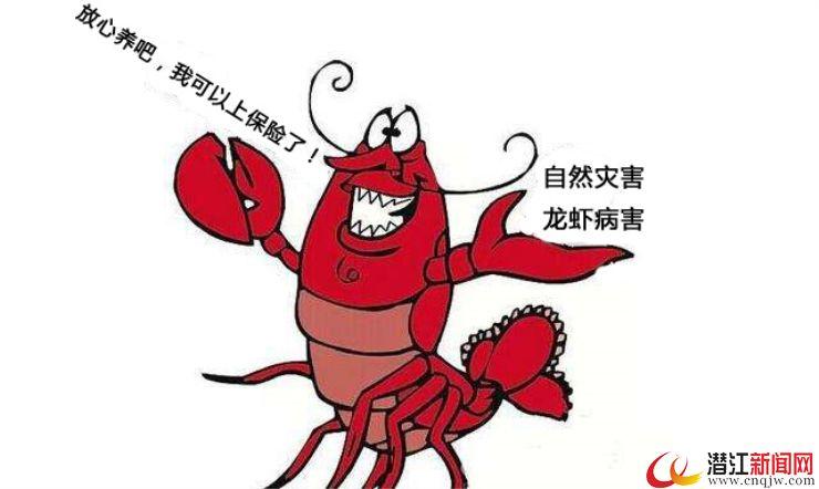 """小龙虾养殖保险让虾农吃下""""定心丸"""""""